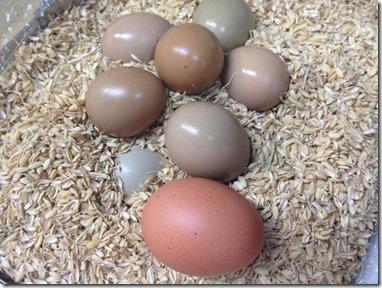 今年も入荷しました 雉の卵です